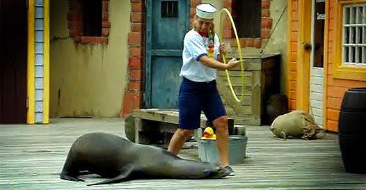 NÃO bombou na net: A foca hilária que você nunca iria conhecer!