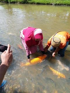 ikan sebarau,ikan sungai,fishing in sabah,wonderful sabah