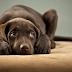 Τα «πάθη» των βεγγαλικών για τους σκύλους μας...