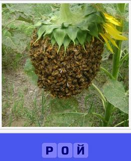 еще 460 слов рой пчел сел на подсолнух 4 уровень