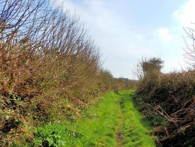 Grass footpath, Cornwall