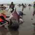 Photo: 300 Whales Die As More Than 400 Whales Beached Themselves In New Zealand