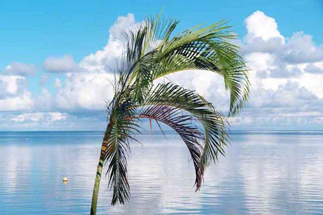 beach,island,palm,ocean;serene