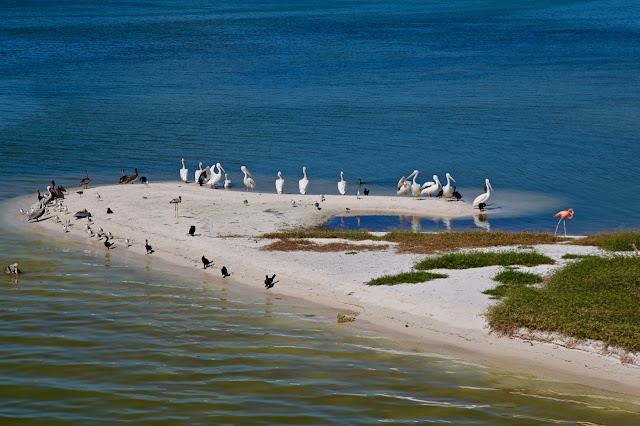 isla de pájaros,  holbox,yucatan, mexico