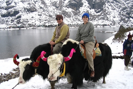 yak-safari-darjeeling-gangtok-tour