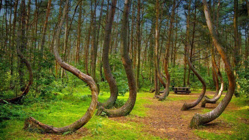Hoia Baciu Ormanı Romanya