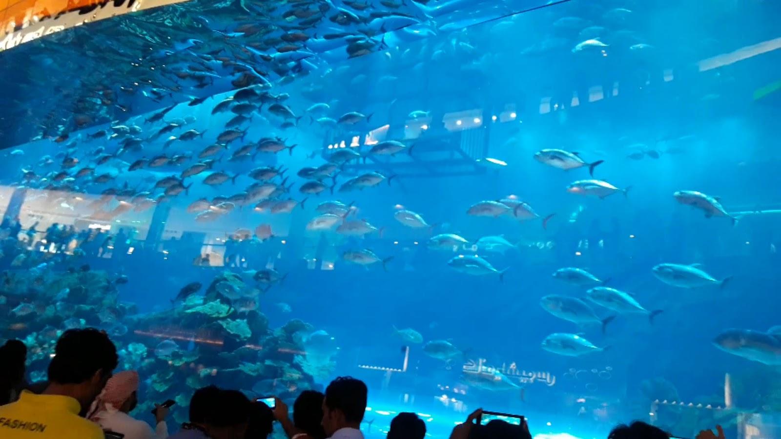 Big aquarium 10-million liters water - ShareTV (Sharing the
