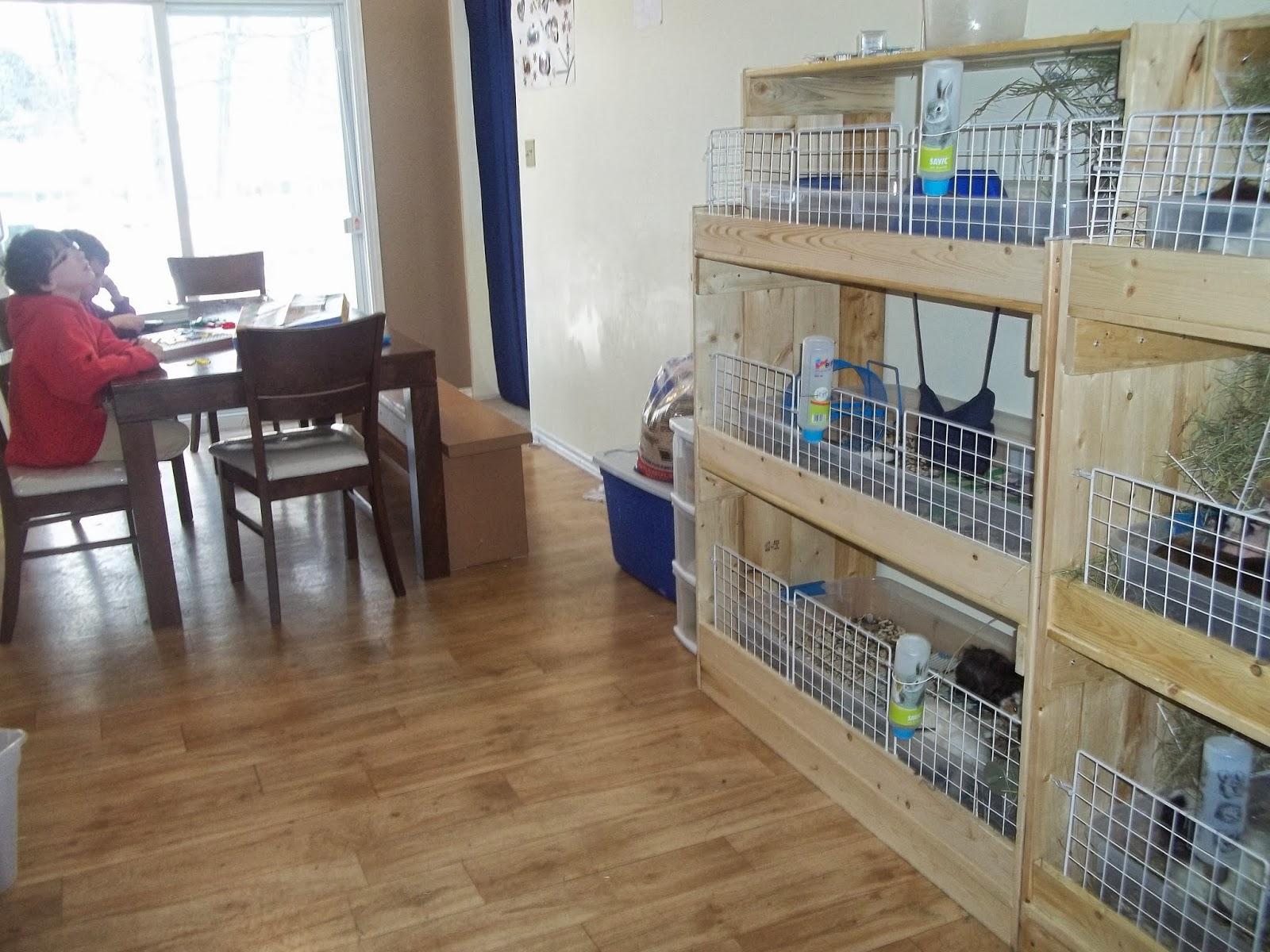 la maison des cochons d 39 inde pourquoi adopter chez nous. Black Bedroom Furniture Sets. Home Design Ideas
