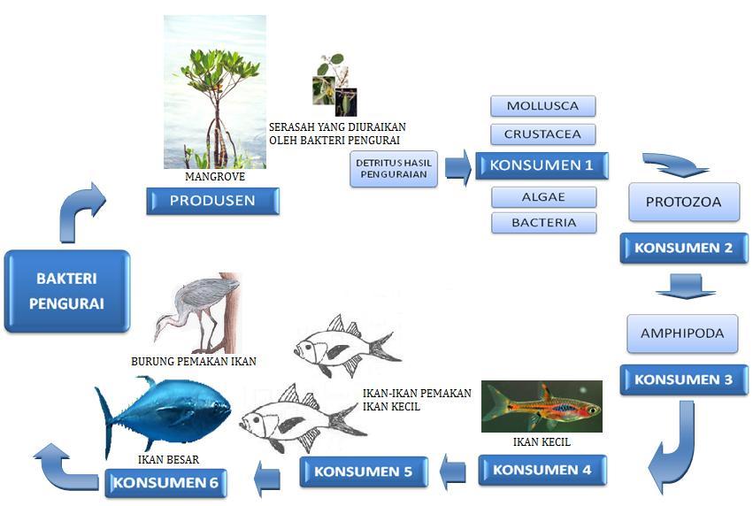 Liza Makalah Sumber Daya Alam Hutan Mangrove