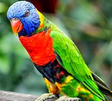780 Koleksi Gambar Hewan Aves Beserta Namanya Gratis Terbaru