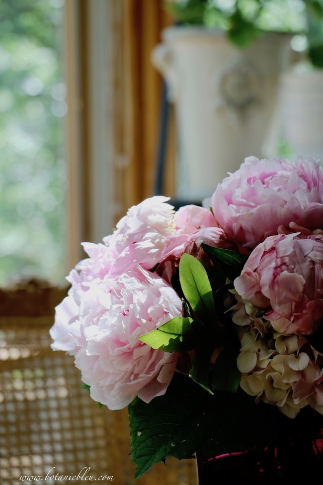 Keep cut peony flowers out of direct sunlight