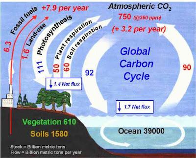 دراسة تؤكد أن الأرض قد تتفرد بالحياة في هذا الكون  Carbon_cycle