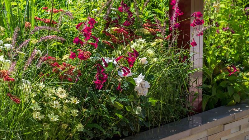 Combinación de plantas de flor en blanco y rojo
