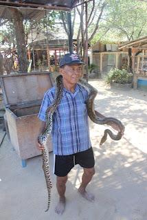 ular di pulau penyu