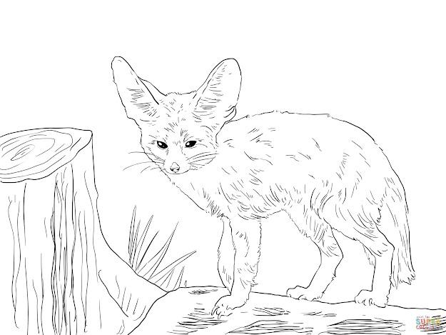 North African Fennec Fox