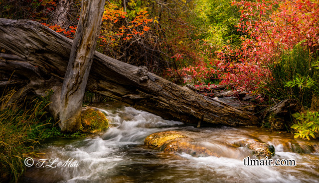 Red Dogwoods, and Maples add just the right touch of color to the moving waters of Little Deer Creek, even a fallen log adds the right look