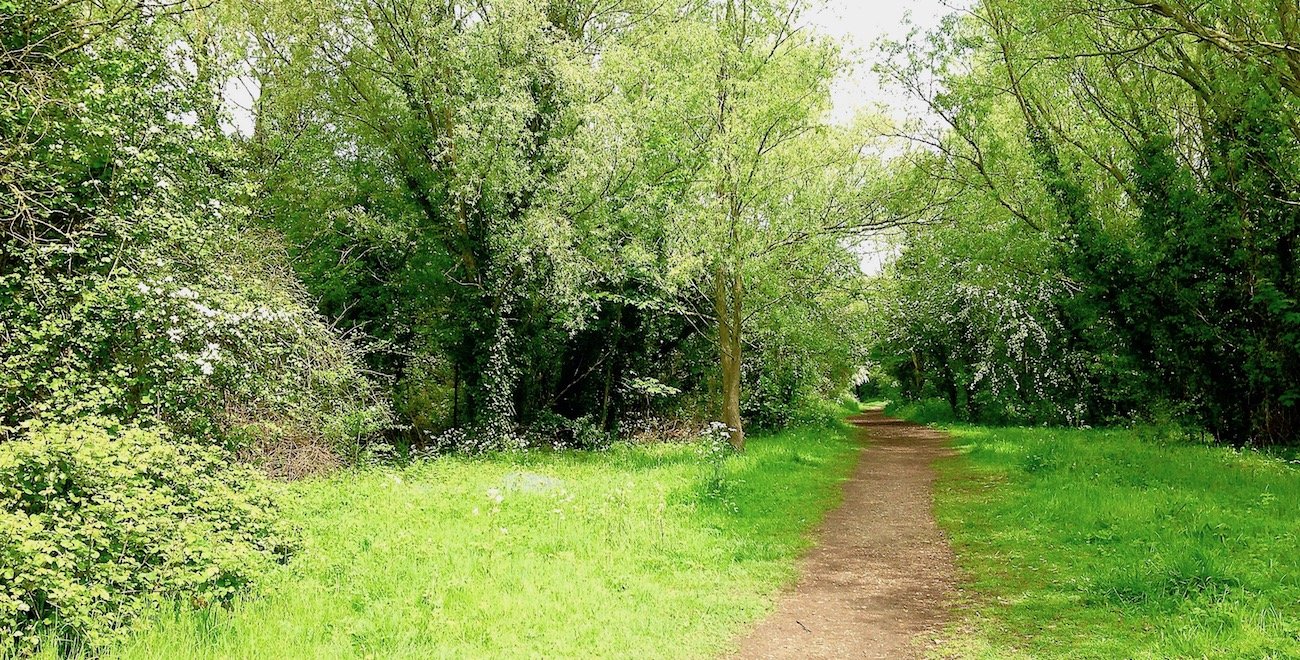 Somersham Nature Reserve