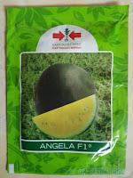 semangka kuning, budidaya semangka, menanam semangka, buah semangka, jual benih semangka, lmga agro