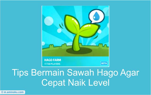 Tips bermain sawah hago agar cepat naik level