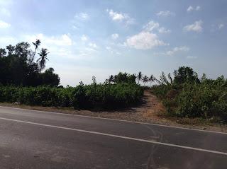 tanah dijual teluk kombal pemenang 4 hektar