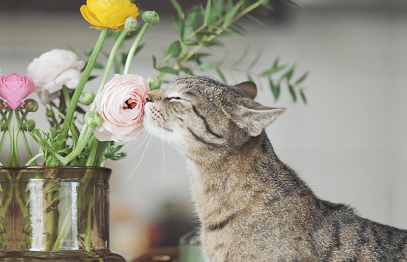 5 maneiras de curtir a primavera no melhor estilo ✿❀❁ | dcoracao.com