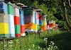 Μεγάλη ανατροπή για τη Μελισσοκομία: Διαδώστε το παντού!!!!