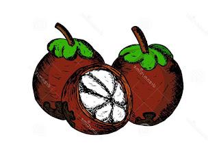Manggis sketch