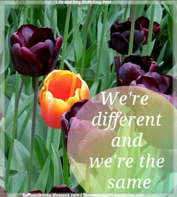 We're Different And We're The Same