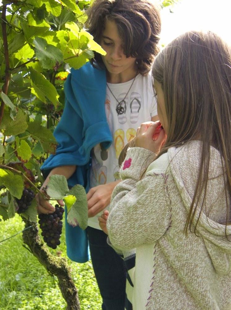 Clara und Dorothea haben eine vergessene Traube gefunden und testen den Geschmack: Kinder in Weinberg