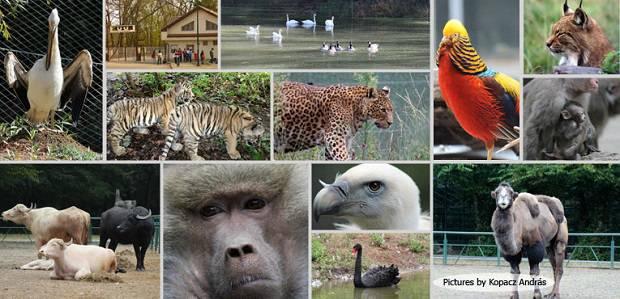 Fotografii la Gradina Zoologica din Targu Mures