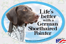 FOR THE LOVE OF GERMAN SHORTHAIR POINTERS