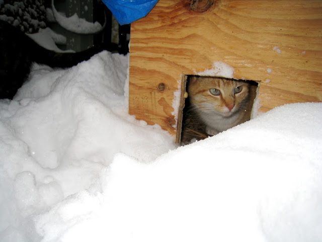 feral cat winter care