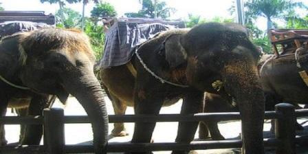 Bali Elephant Safari Park bali elephant safari park taro bali elephant safari park entrance fee bali elephant safari park ubud bali