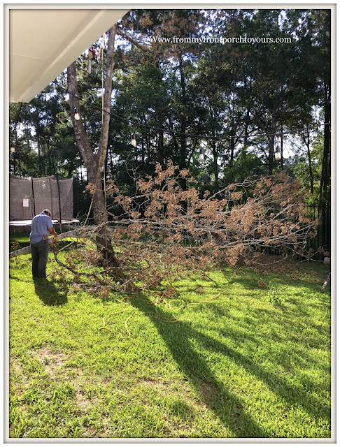 Oak Tree-Landscpaing-Tree-Removal-From My Front Porch To Yours