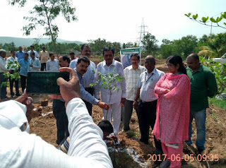 Gangavaram Port celebrates World Environment Day 2017