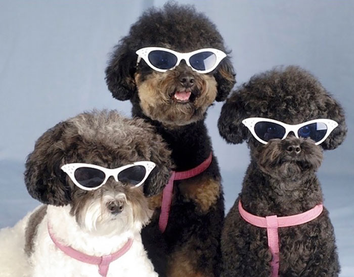 32 Animals That Look Like They're About To Drop The Hottest Albums Of The Year - Why These Dogs Look Like They About To Drop The Most Soulful Motown Album Of 1965