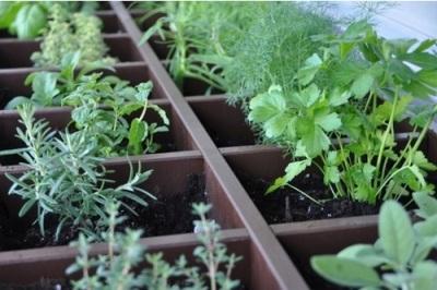 Rak CD yang dimanfaatkan sebagai pot tanaman herbal.
