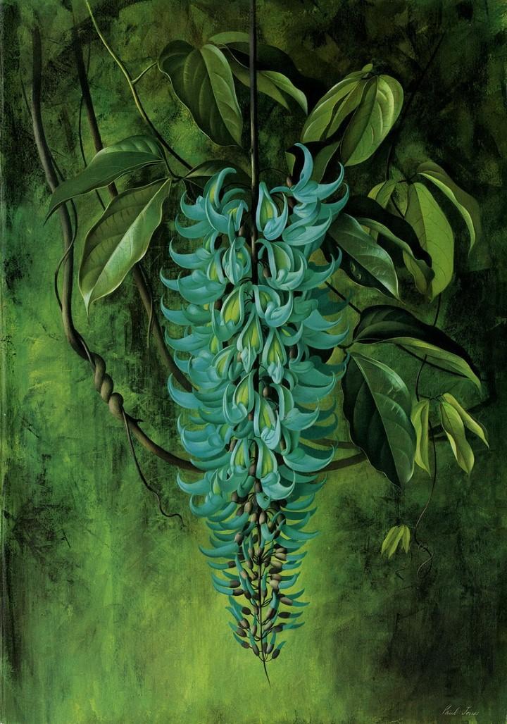 Paul Jones. Акварельные рисунки цветов 43