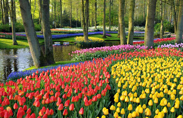 woodland tulip display