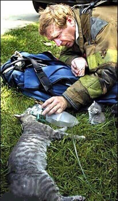 12 Powerful Images That Prove There's Still Kindness In The World - A firefighter with a respirator is trying to rescue a mama cat while her kitten is watching.