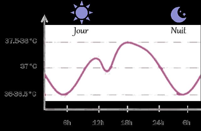 variation température corporelle journée