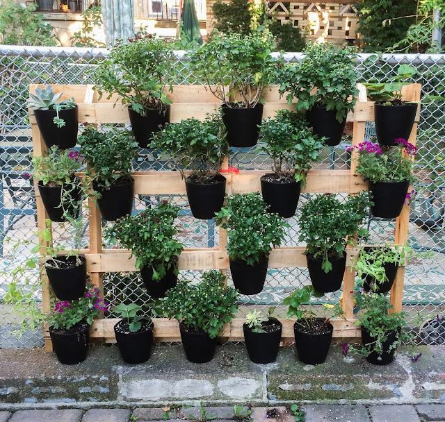 The Lazy Man's Vertical Pallet Garden