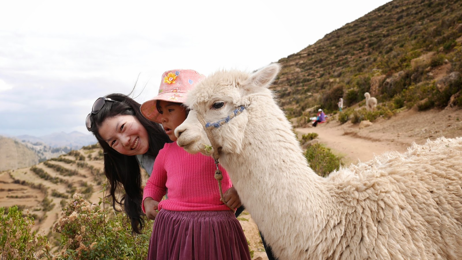Baby Alpaca, Isla del Sol, Lake Titicaca, Bolivia