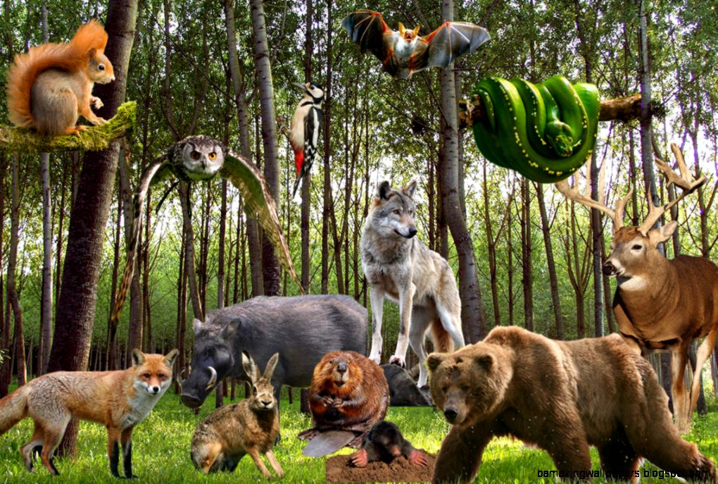 All Animals Wallpaper: All Animals Together In Forest