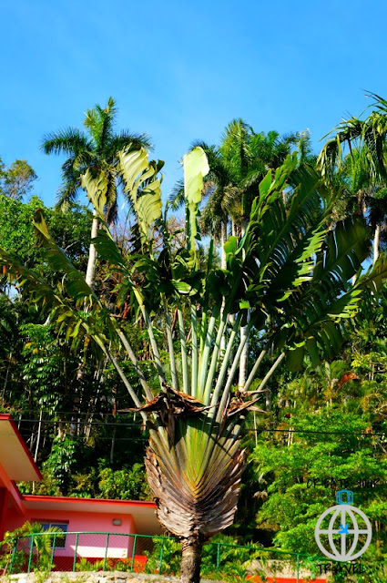 palma turysty