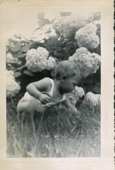 baby by hydrangea bush