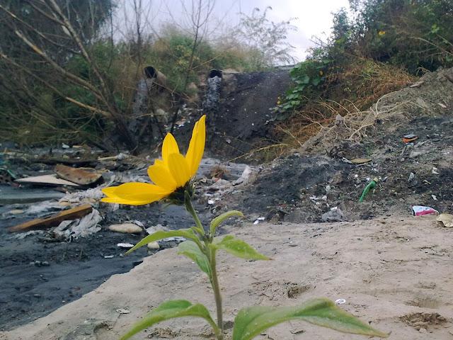 цветок у озера Горячка