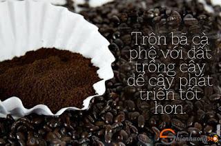 10 Công dụng của bã cà phê: phân bón