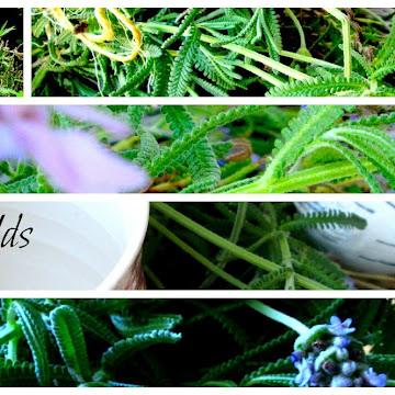 Lavender Fields-A Spot Of Tea