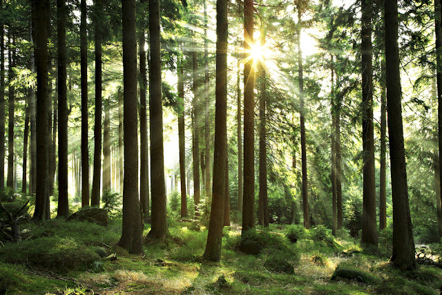 TOp 10 + Happy Forest Day Wallpaper